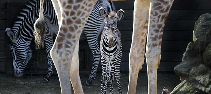 meravonden zoo