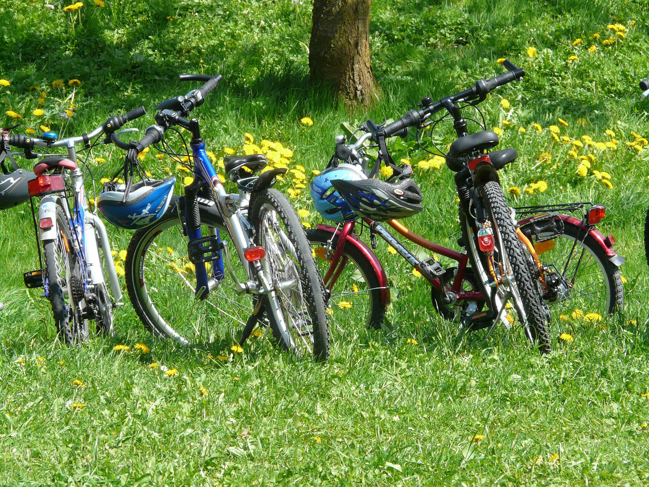 Tips for a Family Bike Trip